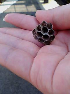 ちっちゃい蜂の巣